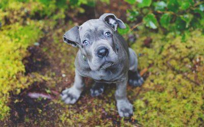 First puppy Owner